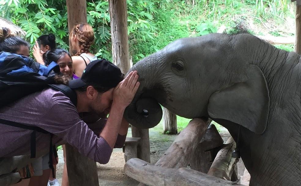 Dan head-to-head with Dakhao, a young elephant